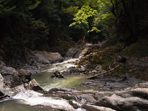 Panorama of the canyon with a creek and moss Stock Photos