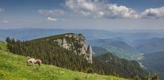 Panorama of the Carpathian mountains  near Ceahlau. Romania Royalty Free Stock Photography