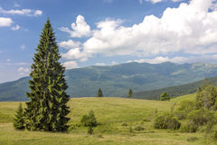 Panorama of Carpathian mountains in summer with lonely pine tree Royalty Free Stock Images