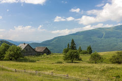 Panorama of Carpathian mountains in summer with lonely pine tree Stock Images
