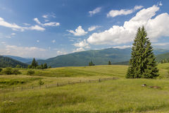Panorama of Carpathian mountains in summer with lonely pine tree Stock Image
