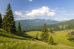 Panorama of Carpathian mountains in summer with lonely pine tree Stock Photos