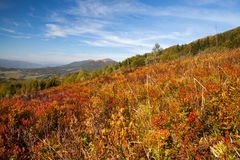 Panorama on Carpathians mountains. Stock Image