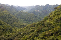 Panorama of Cat Ba National Park Royalty Free Stock Image