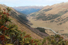 Panorama of Caucasus mountains with rhododendron. Royalty Free Stock Image