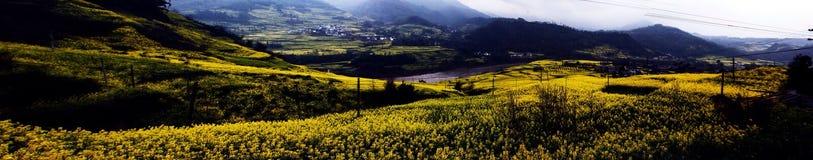 Panorama of cauliflower fields Royalty Free Stock Photography