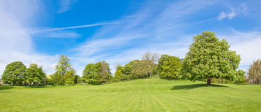 Panorama of the chestnut tree Royalty Free Stock Images