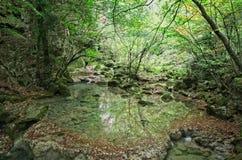 Panorama chowany staw w lesie zdjęcia royalty free
