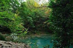 Panorama chowany staw w lesie zdjęcie royalty free