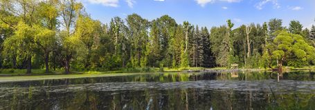 Panorama of a city pond on a summer evening Royalty Free Stock Photography