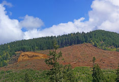 Panorama - Clear cut logging slope Royalty Free Stock Photos