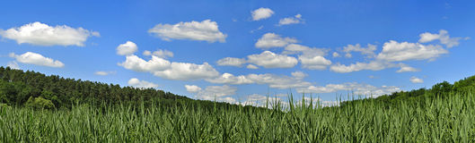 Panorama with clouds and reed Royalty Free Stock Photography