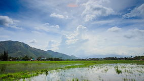 Panorama of Cloudy Sky over Rice Field in Water Hills Village. Panorama of cloudy sky over rice field in water small distant village and green hills stock video
