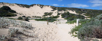 Panorama of Coastal  Dune Landscape Royalty Free Stock Images