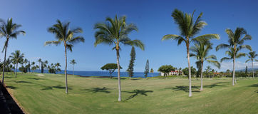 Panorama, coconut palms on golf course fairways Stock Photography