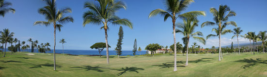 Panorama, coconut palms on golf course fairways Stock Photo