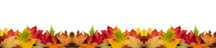 Panorama of colorful autumn leaves Royalty Free Stock Images