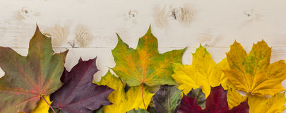 Panorama of colorful autumn leaves in yellow, green and brown Stock Photography