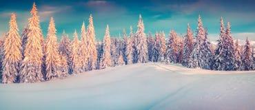 Panorama colorido do inverno de montanhas nevado foto de stock