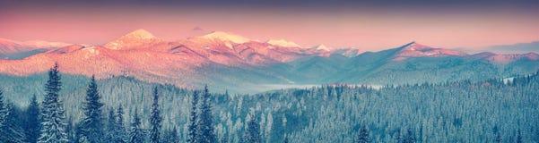 Panorama colorido do inverno nas montanhas Carpathian Imagens de Stock