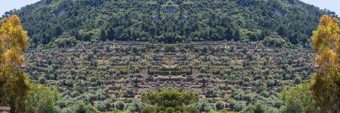 Panorama, coltivazione sull'isola di Mallorca, S del campo del terrazzo Fotografia Stock