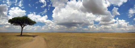 Panorama com a árvore em África foto de stock royalty free
