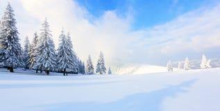 Panorama com as árvores na neve imagem de stock