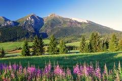 Panorama com flores - Eslováquia da montanha da beleza imagens de stock royalty free