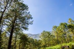 Panorama com a floresta carpathian em Romania Imagem de Stock