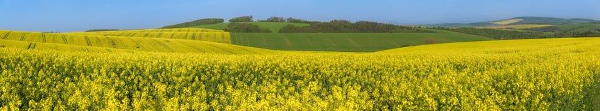 Panorama com os montes amarelos e verdes Imagem de Stock