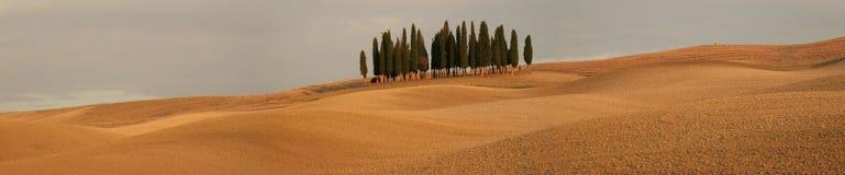 Panorama con gli alberi di cipresso fotografia stock