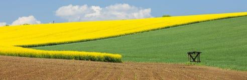 Panorama con los campos coloreados en tiempo de primavera Foto de archivo libre de regalías