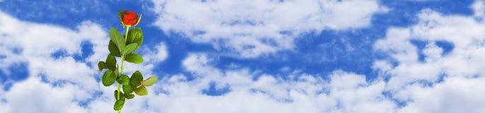 Panorama con una rosa contra el cielo con las nubes blancas Imagenes de archivo