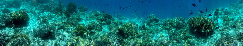Panorama Coral Reef Scene Stock Images