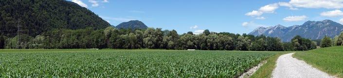 Panorama of corn field Stock Image