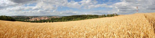 Panorama cornfield royalty free stock photos