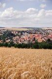 Panorama cornfield Royalty Free Stock Photography