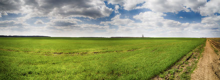 Panorama of a country road on the edge of a field Royalty Free Stock Image