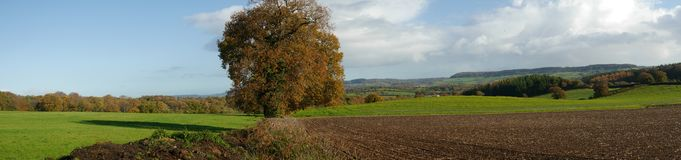 Panorama of the countryside in Devon England in November. A panorama of a rural scene in the countryside of Devon in England, taken in November royalty free stock photo