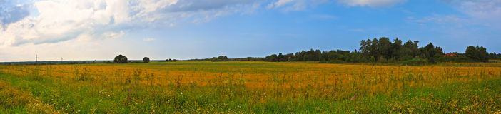 Panorama countryside wide view with trees behind. Royalty Free Stock Image