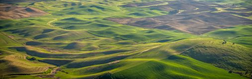 Panorama: cultivo no Palouse Imagens de Stock Royalty Free