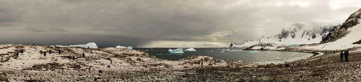 Panorama of Cuverville Island with gentoo penguins in Antarctica. Stock Images