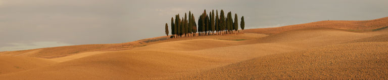 Panorama with cypress trees Stock Photo