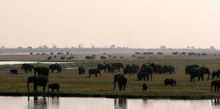 Panorama d'éléphant Photos libres de droits