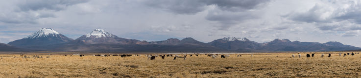 Panorama d'Altiplano Images libres de droits
