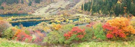 Panorama d'arbre et de lac d'automne dans Jiuzhaigou photographie stock libre de droits