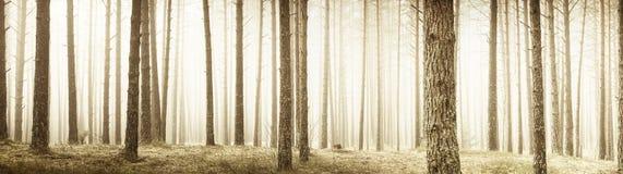 Panorama d'arbres photo stock