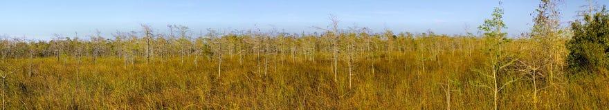 Panorama d'horizontal de Cypress de marais Images libres de droits