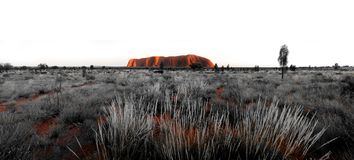 Panorama d'Uluru de roche d'Ayres Photographie stock libre de droits