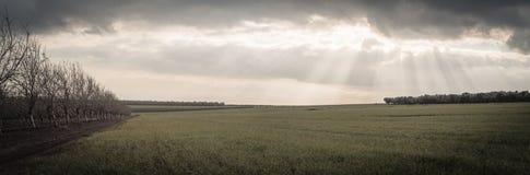 Panorama d'un champ vert ouvert avec le verger des arbres et des rayons de soleil photographie stock